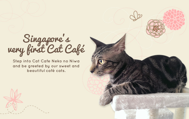 catcafe_100313_banner_01