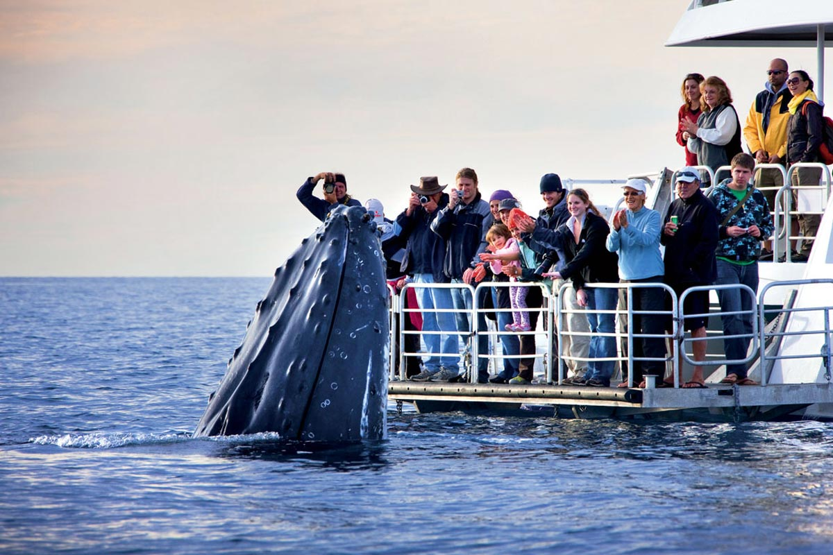 Whale Watching, a unique experience