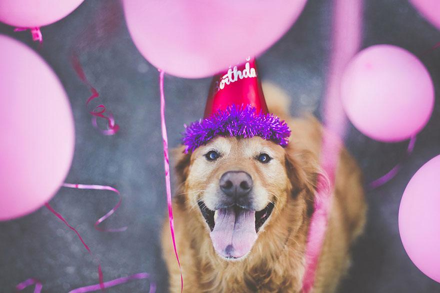 dog-photography-chuppy-golden-retriever-jessica-trinh-4