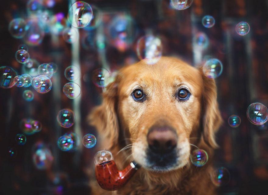 dog-photography-chuppy-golden-retriever-jessica-trinh-8