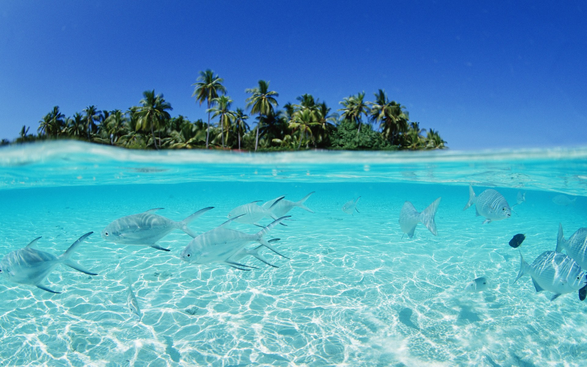 The Reef in the Maldives
