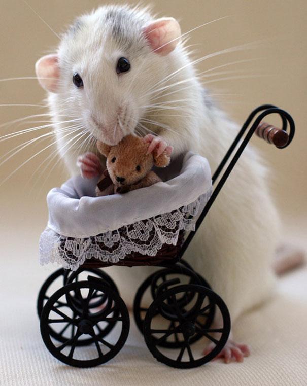 rats-with-teddy-bears-ellen-van-deelen-1