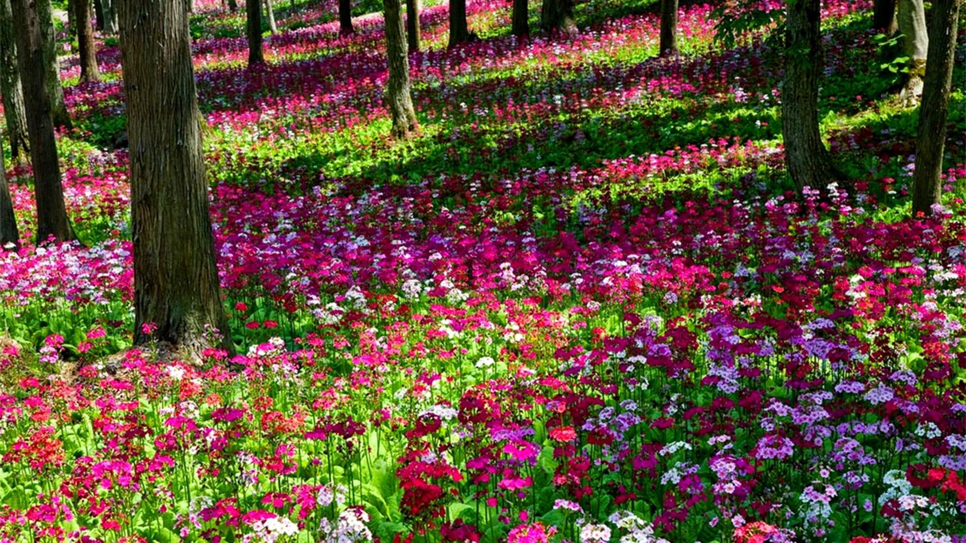 rose-flower-garden-2