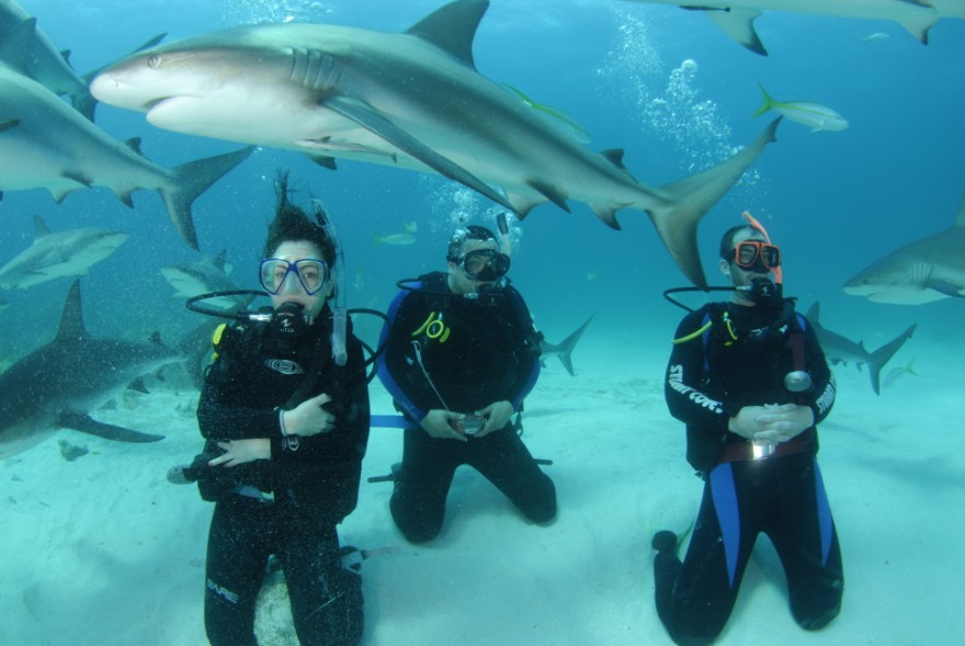 Shark Diving outside the cage in the Bahamas (www.sharkschool.com)