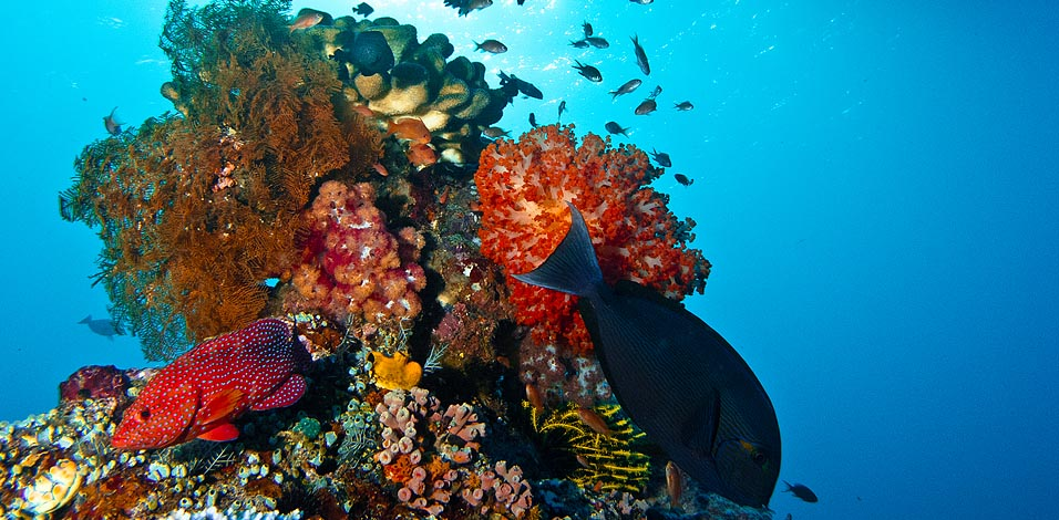 Underwater Photography Gallery: Liveaboard Dive Trip to Komodo N