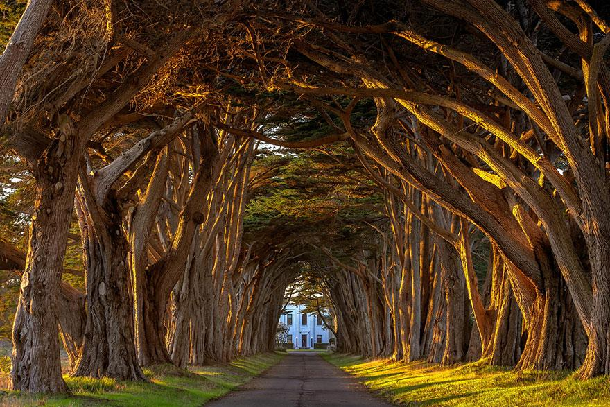 Cypress Tree Tunnel at the Historic Marconi Wireless Station, California, U.S.