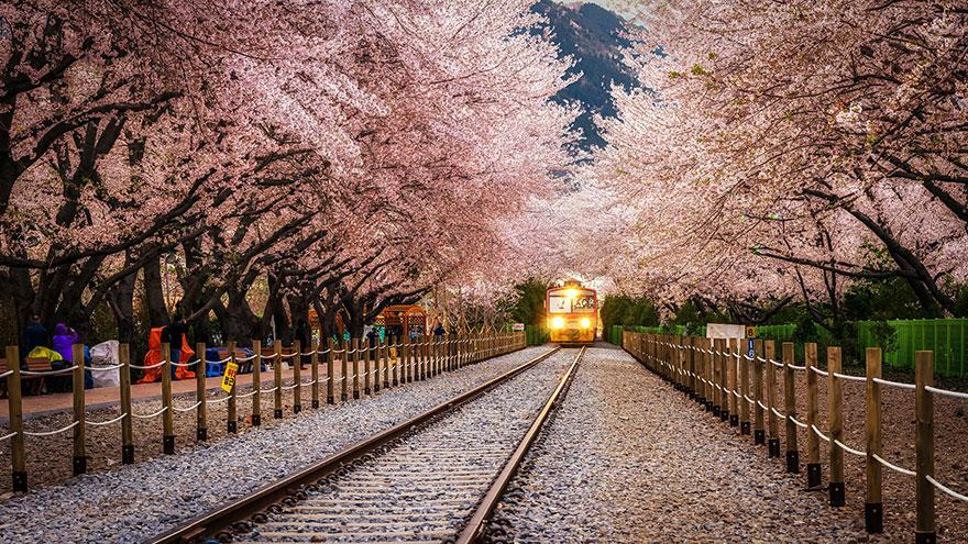 Gyeonghwa Station, Jinhae, South Korea