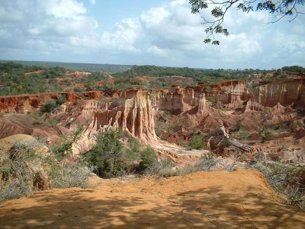 Picture by www.bigcatsexploration-safaris.com