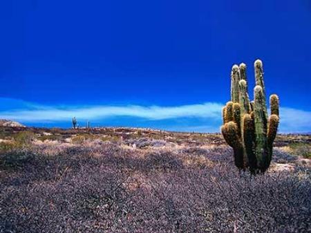 patagonia desert 3