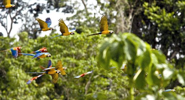 image: 10000birds.com