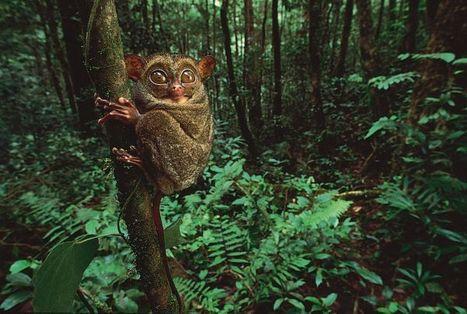 a foreste pluviali scoop.com