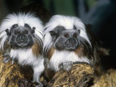 colombia raiforest squidoo.com