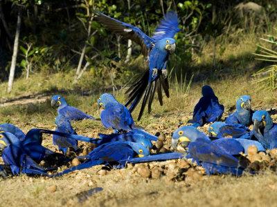 colombia rainforest rainforest-fact.com