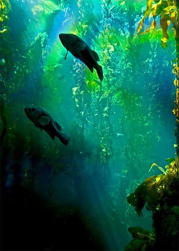 kelp forest australia vision.princeton.edu