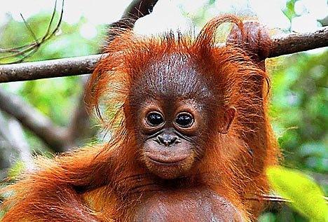 malaysia rainforest eco-business.com