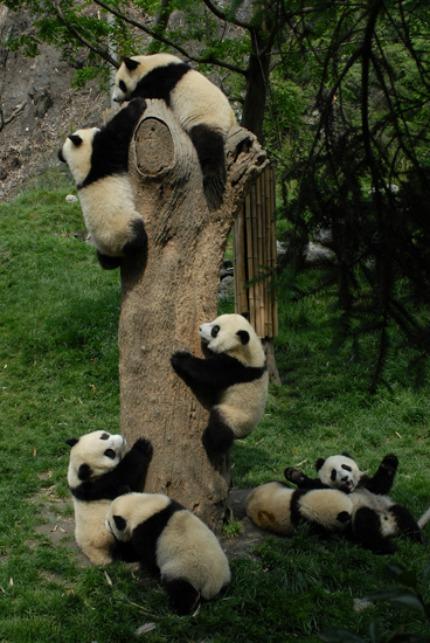 panda reserve 4 ingrandire