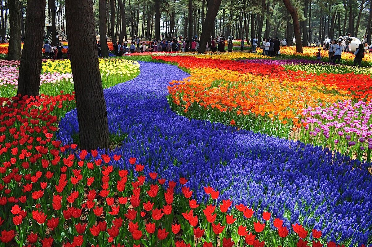 The kingdom of flowers, Hitachi Seaside Park