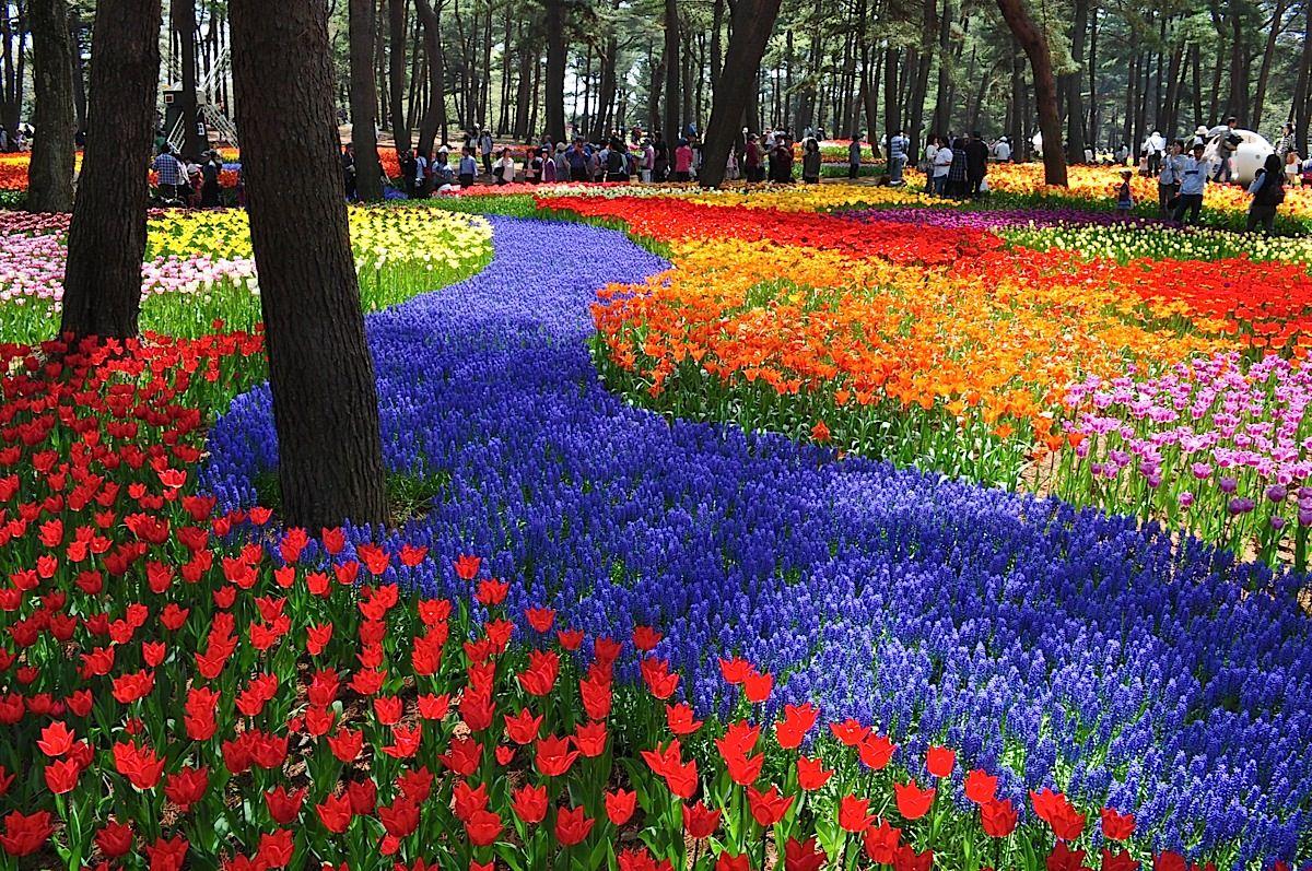 Il regno dei fiori, Hitachi Seaside Park