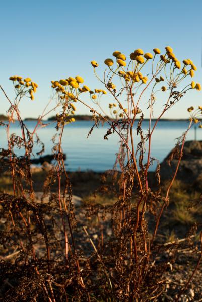 arcipelago kvarken 13a