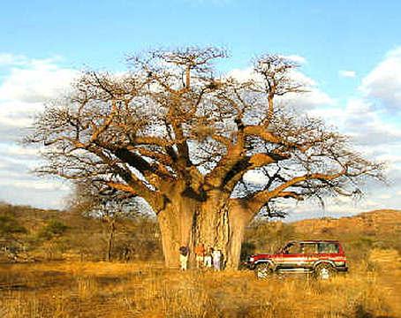 mapungubwe national park 6