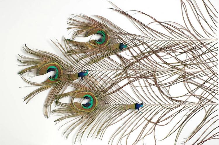 a copertina feathers-6
