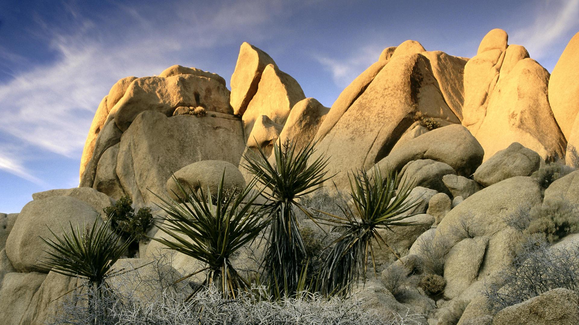 Rock Formations Joshua Tree National Park California The Golden Scope