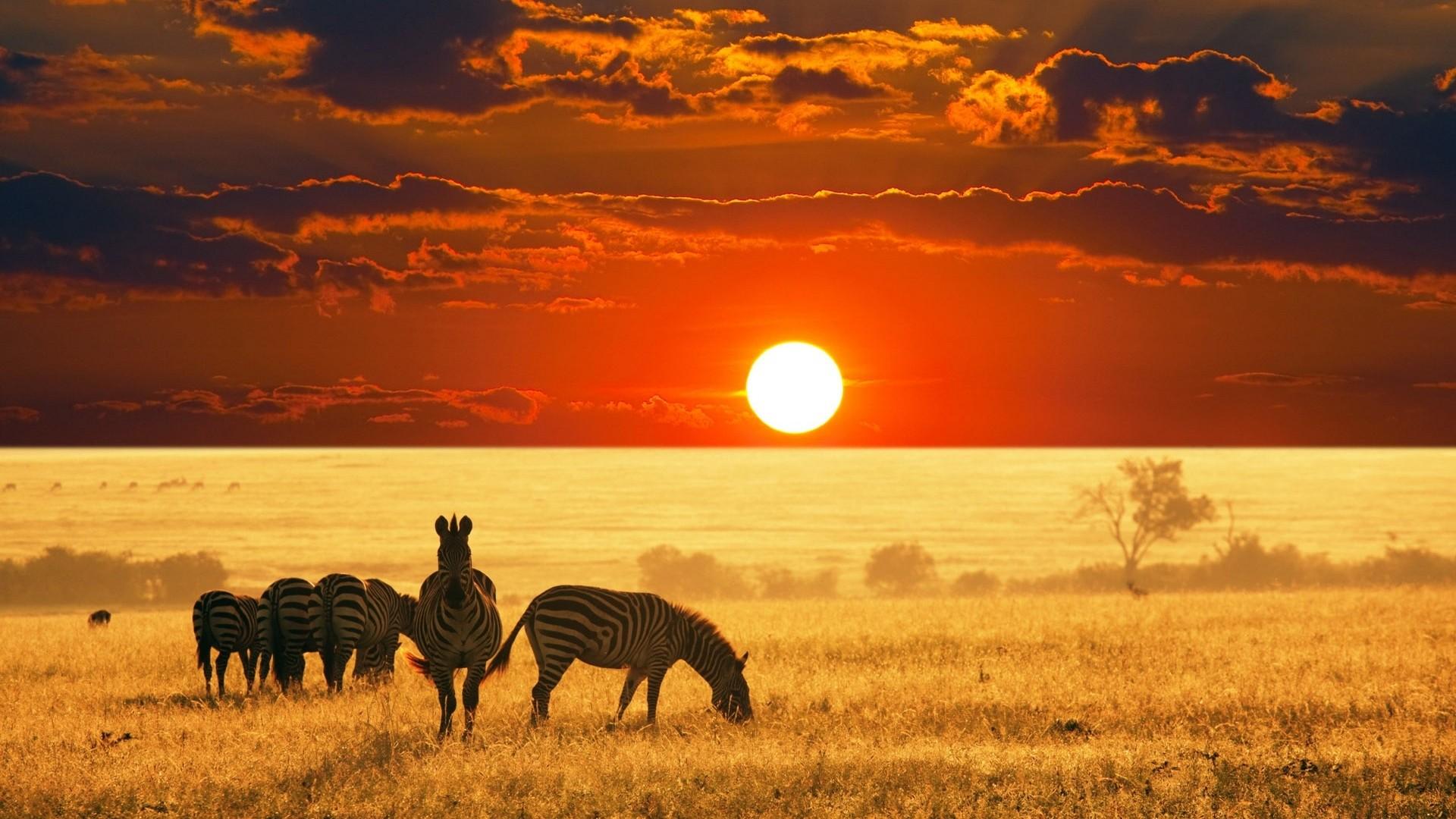 Especialistas African Safari de vacaciones