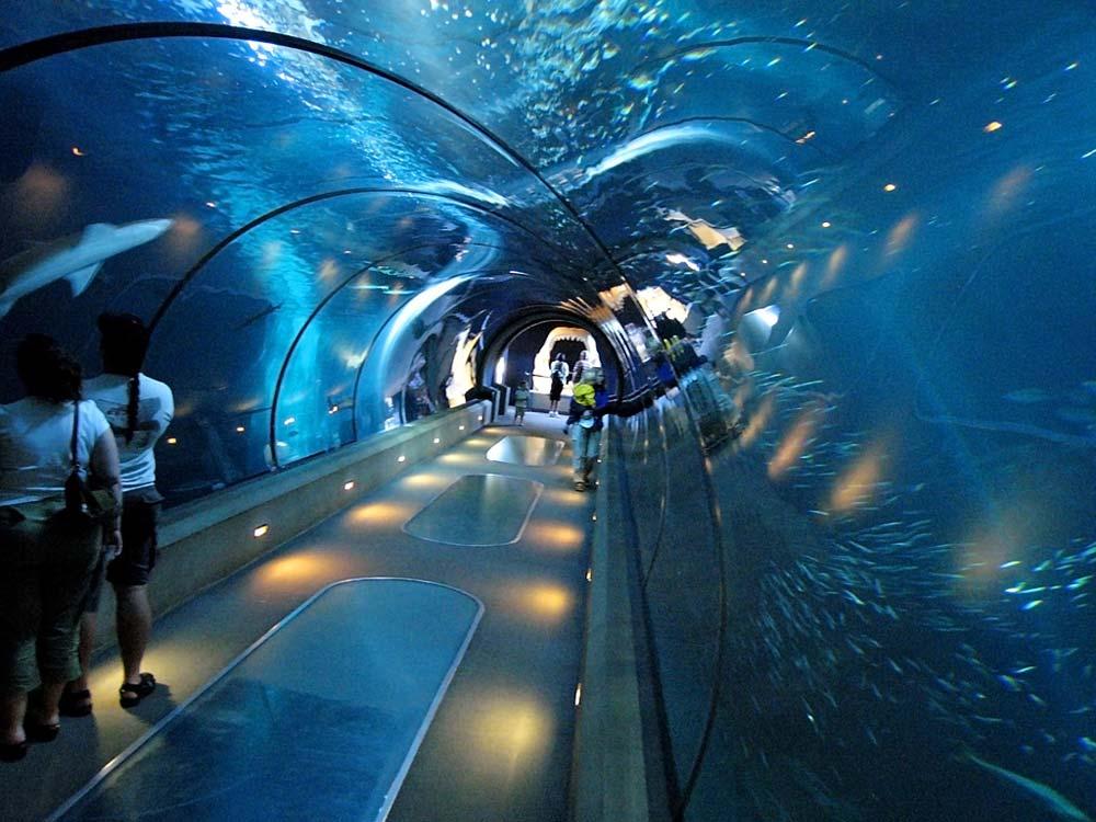 Shedd Aquarium The Golden Scope