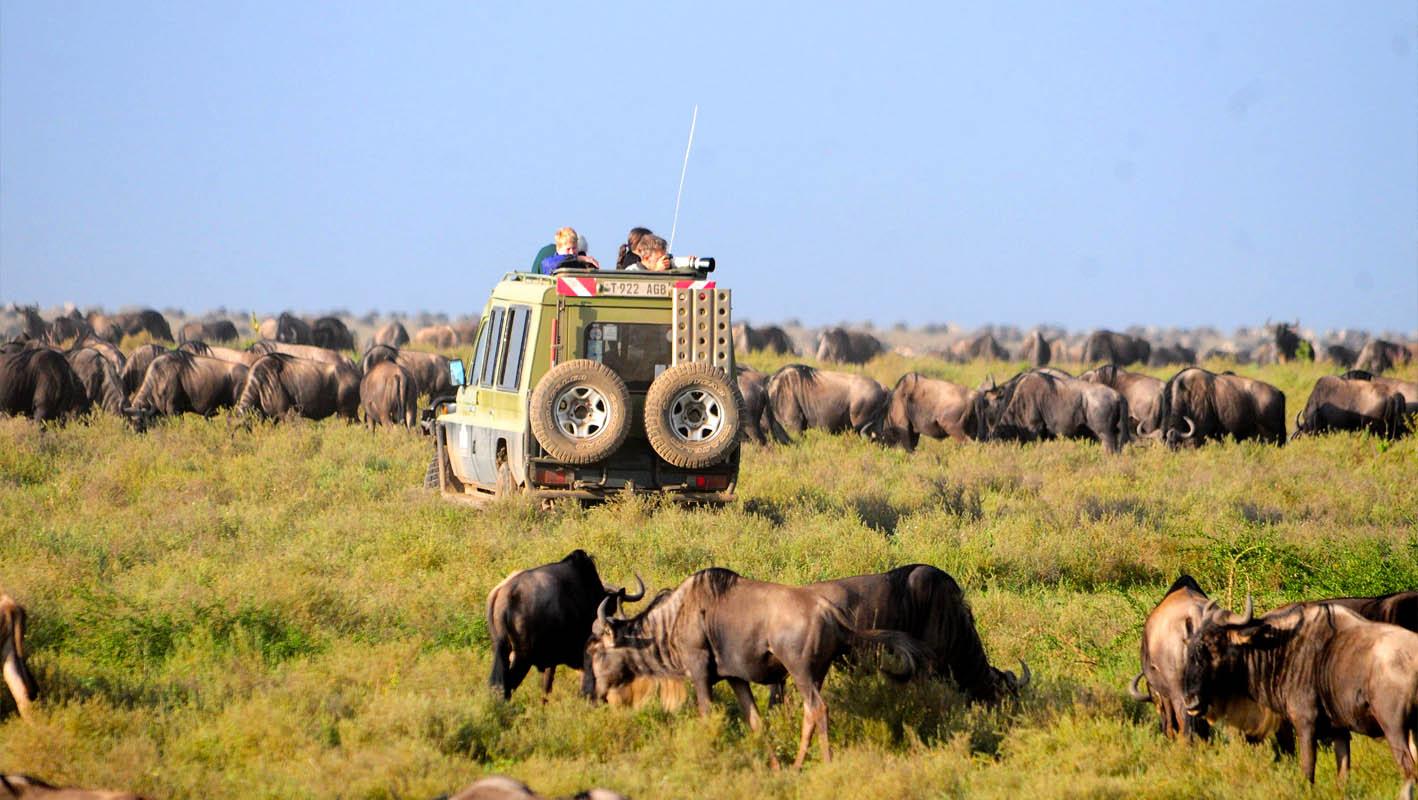 Best Kruger Safari Tours