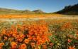 0 copertina giovedi Namaqualand