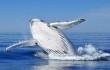 0 copertina giovedi balene 2