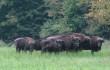 0 copertina venerdi poland bison