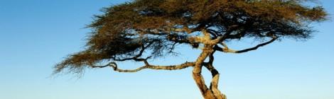 00 copertina venerdì Piaya-Maasai