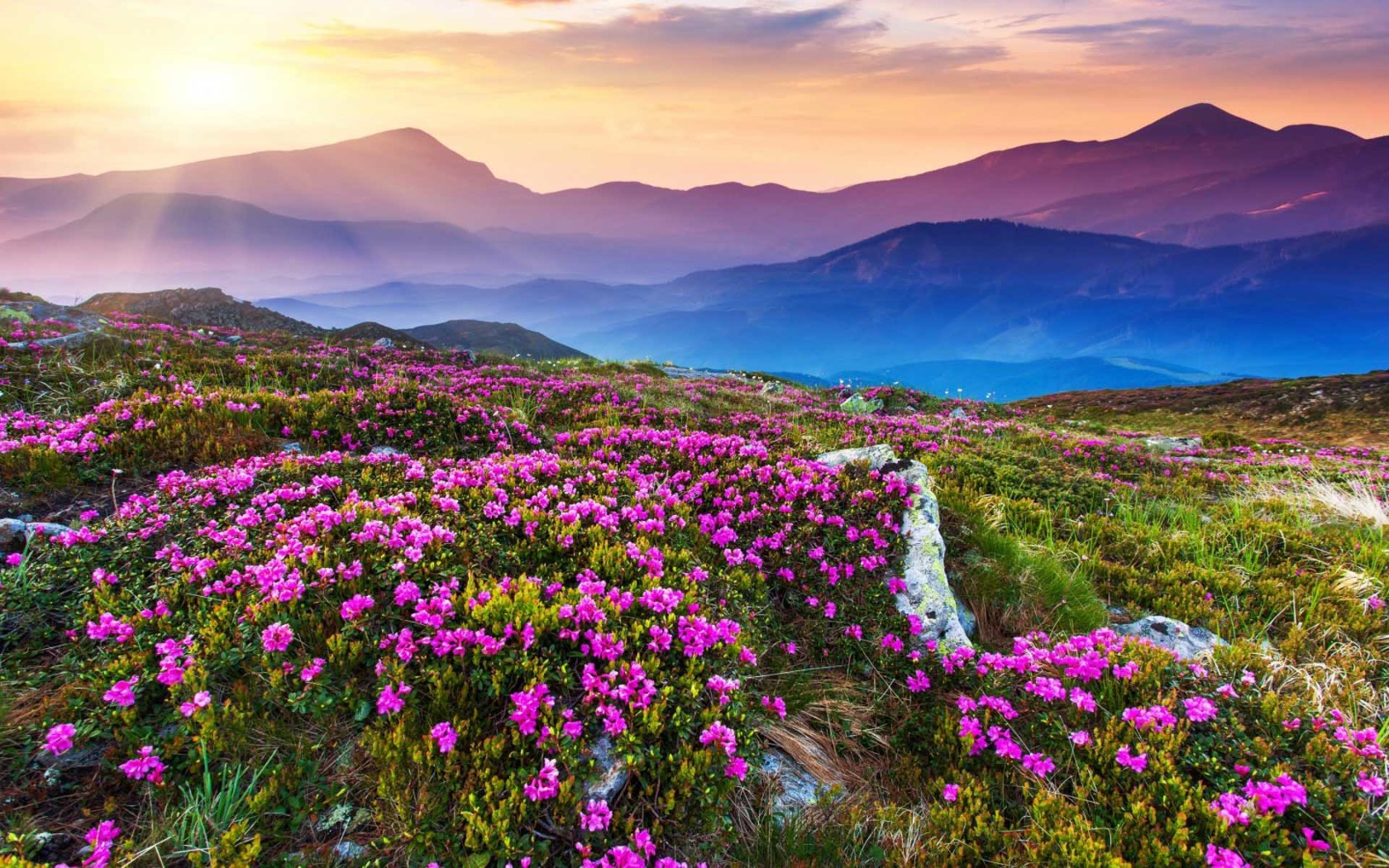 valley-of-flowers-wallpapers-1680x1050 - The Golden Scope
