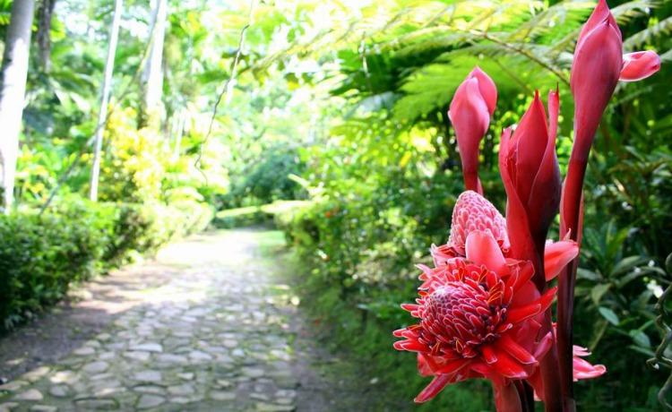 Il Giardino Botanico Castleton
