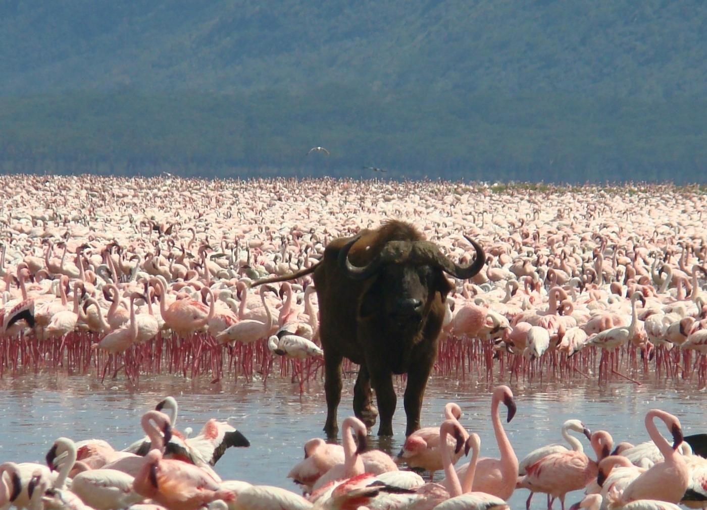 Lake-Nakuru 2a