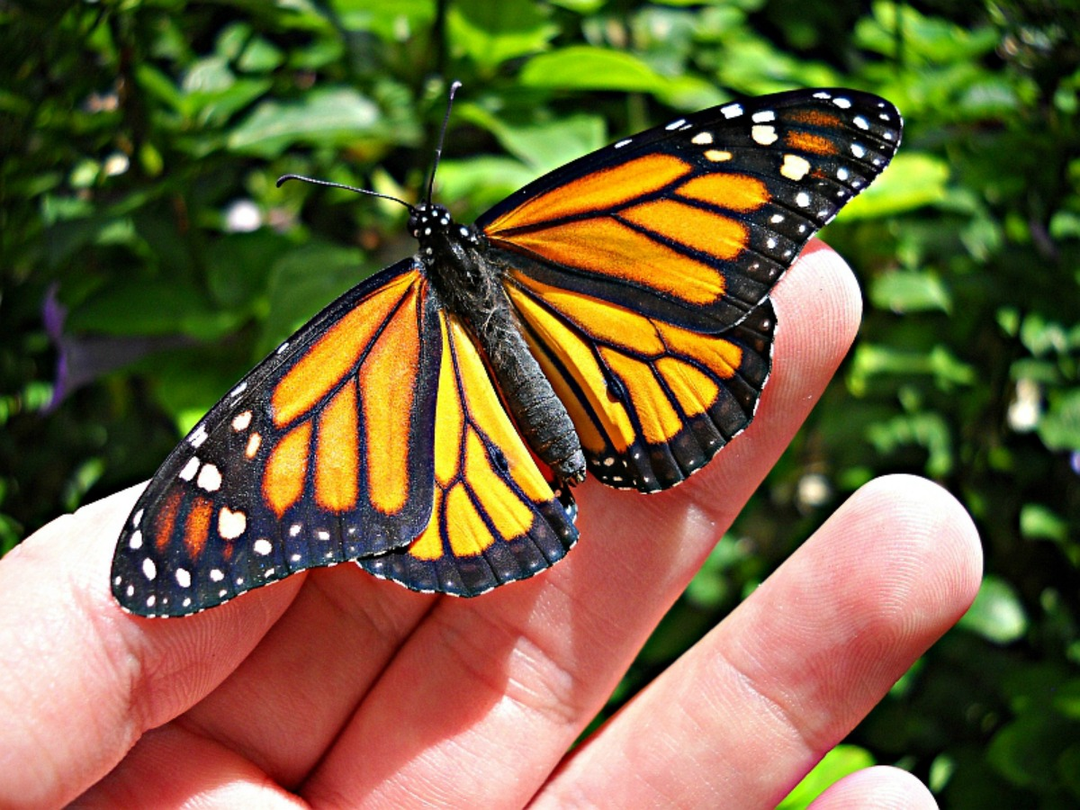 monarch butterfly biosphere reserve the golden scope