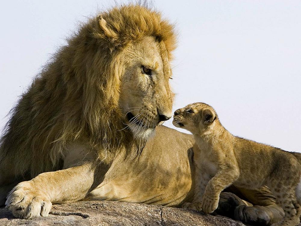 Riserva Nazionale Masai Mara
