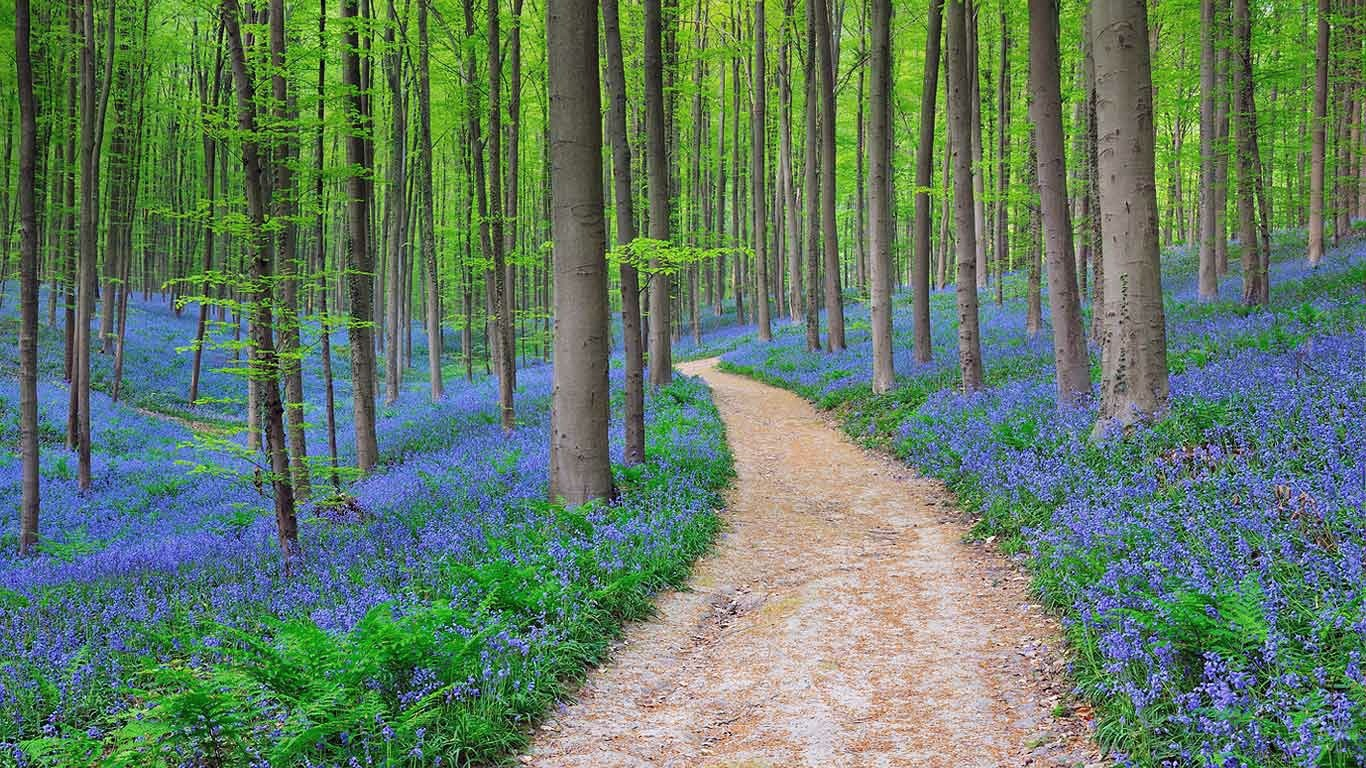 Hallerbos, a fairytale destination