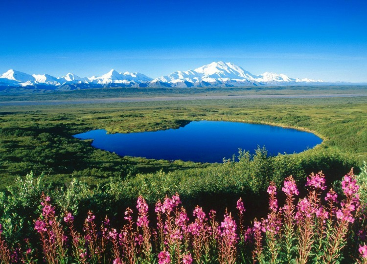 Discovering Denali National Park