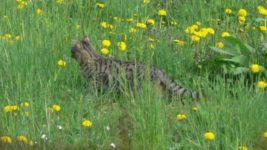 Il Parco Naturale Dei Nebrodi Sicilia The Golden Scope